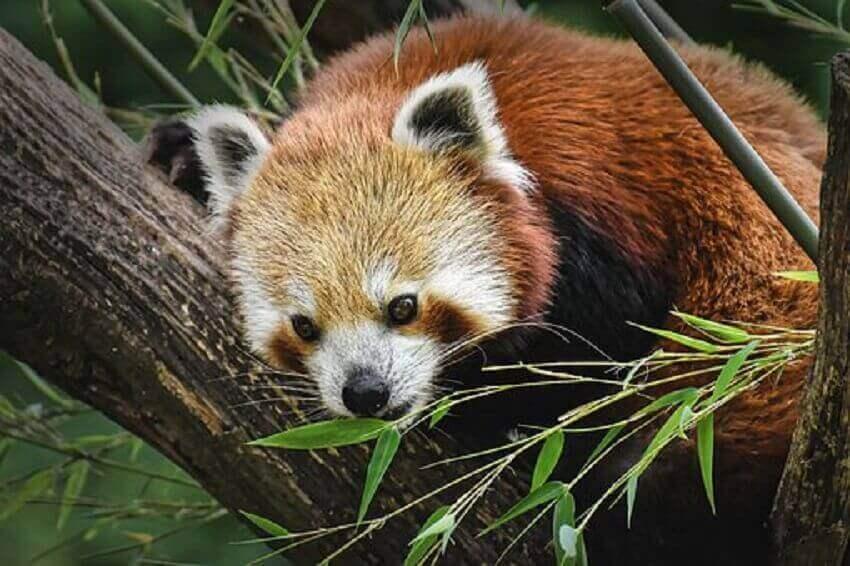cheap-travel-places-panda