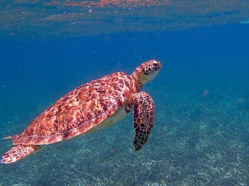 Turtle-Belize-cheap-travel-places